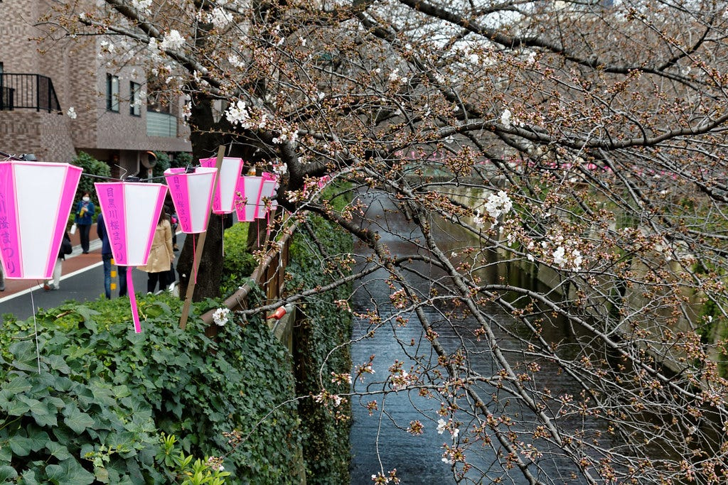 """""""Nakameguro river 3/23"""" by KimonBerlin is licensed under CC BY-SA 2.0"""