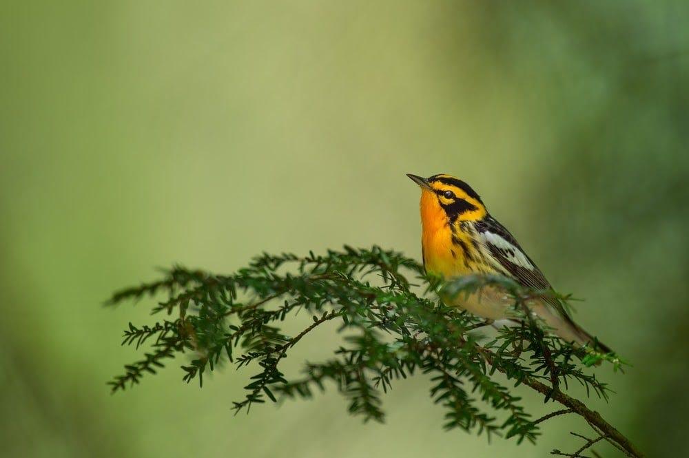 orange and black bird on tree branch