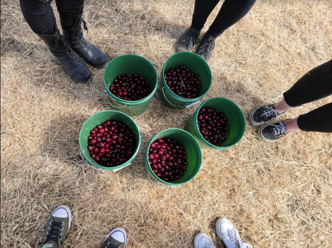 5 buckets of cherries on the ground surrounded by 5 pairs of feet in shoes