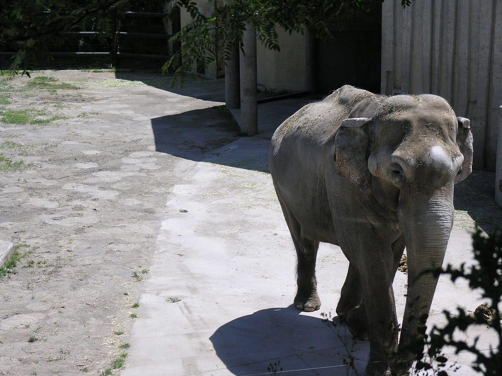 Oregon Elephant