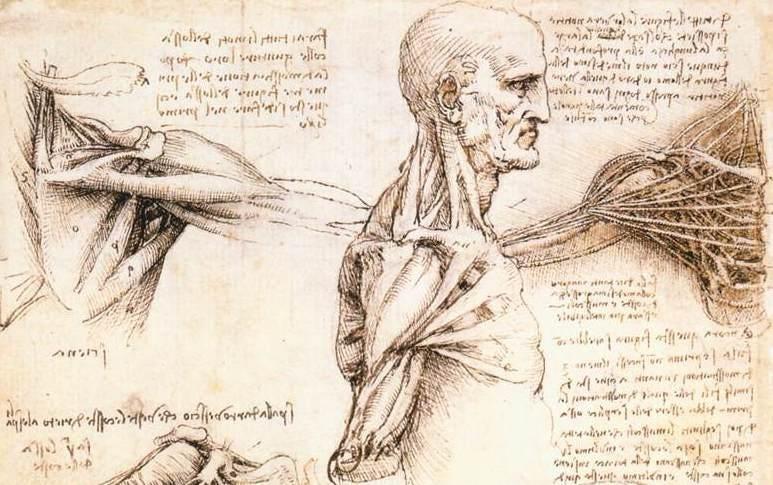 Leonardo Da Vinci's Scientific Studies, 500 Years Later