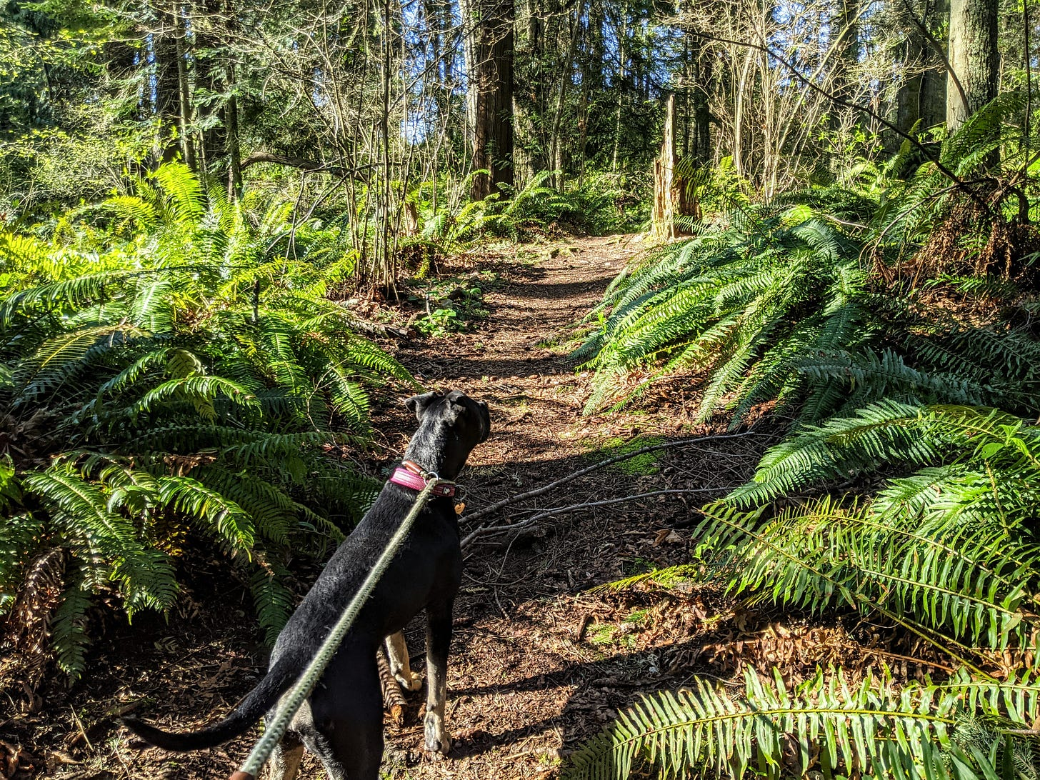 Mabel is eager to travel the path of understanding. (Photo: David Roberts)