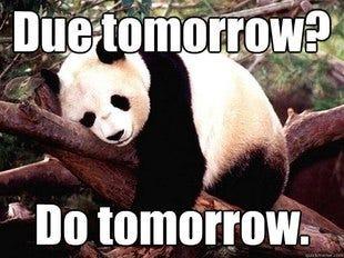 Giant Pandas: Panda Meme