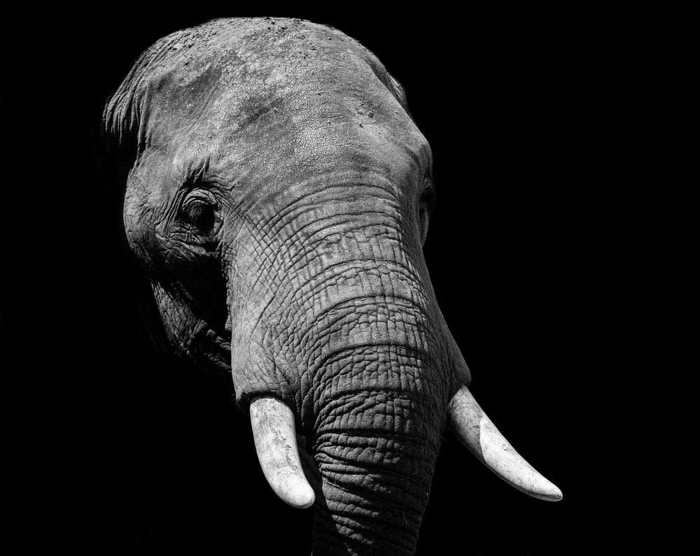 An elephant face in light and shadow