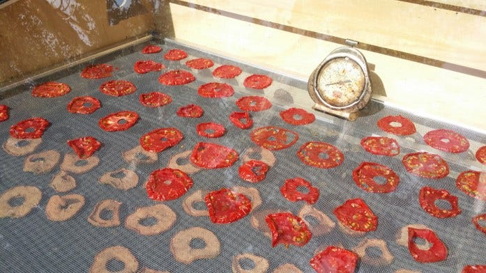 solar dehydrated tomatoes