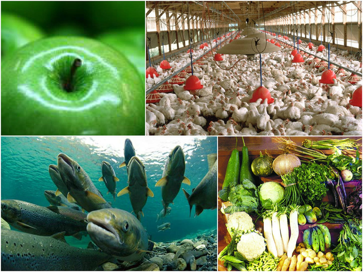 It makes the most sense, from an energy perspective, to grow vegetables, fruits, chicken and fish locally in Singapore.