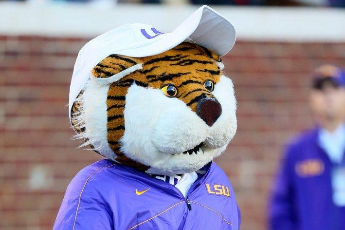 LSU Tigers mascot Mike the Tiger, dressed up as coach Les Miles. | Lsu  mascot, Lsu tigers football, Lsu tigers