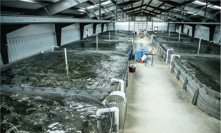 Indoor fish farm