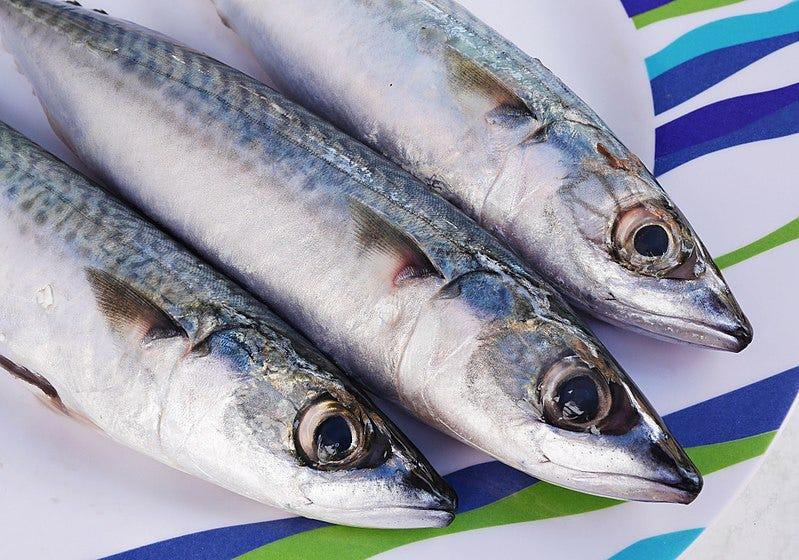 File:Atlantic mackerel (Scomber scombrus).jpg