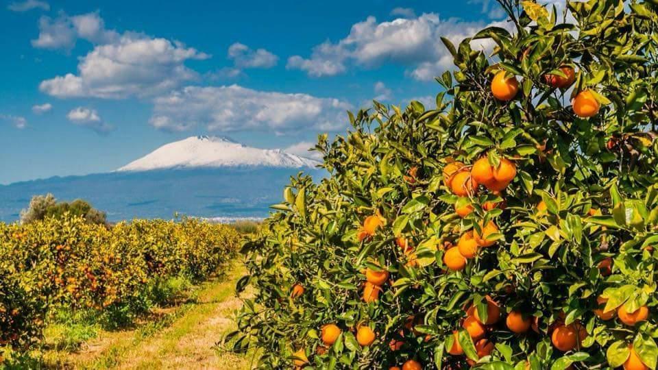 a day at an Organic Citrus Farm
