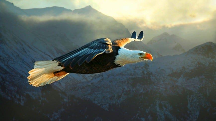 Eres un águila o una gallina? (Fábulas para negocios)