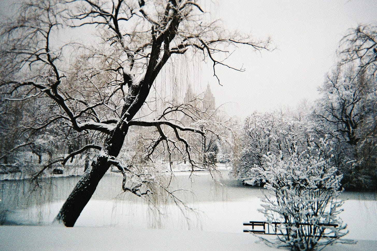 File:Central Park under snow, NYC, February 2010.jpg - Wikimedia Commons