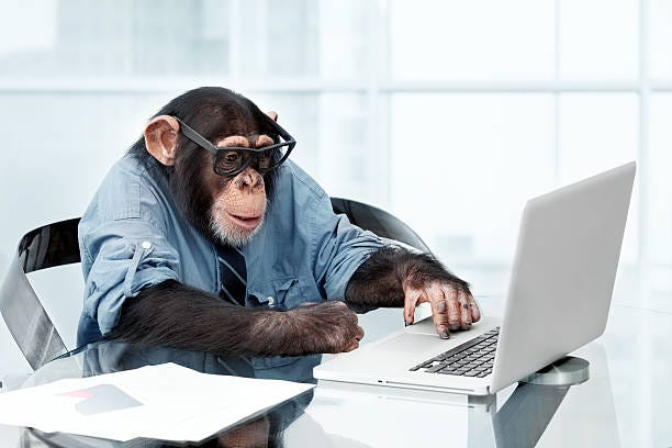 Monkey Computer Stock Photos, Pictures & Royalty-Free Images - iStock