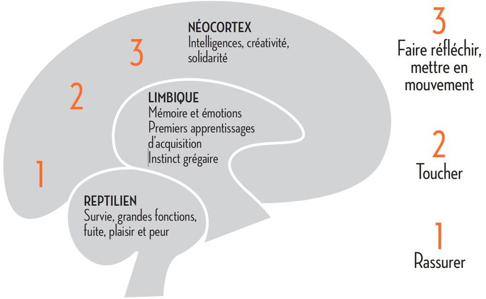 https://business.lesechos.fr/images/2019/08/15/331070_pitch-seduire-les-trois-cerveaux-web-tete-0601647404853.jpg