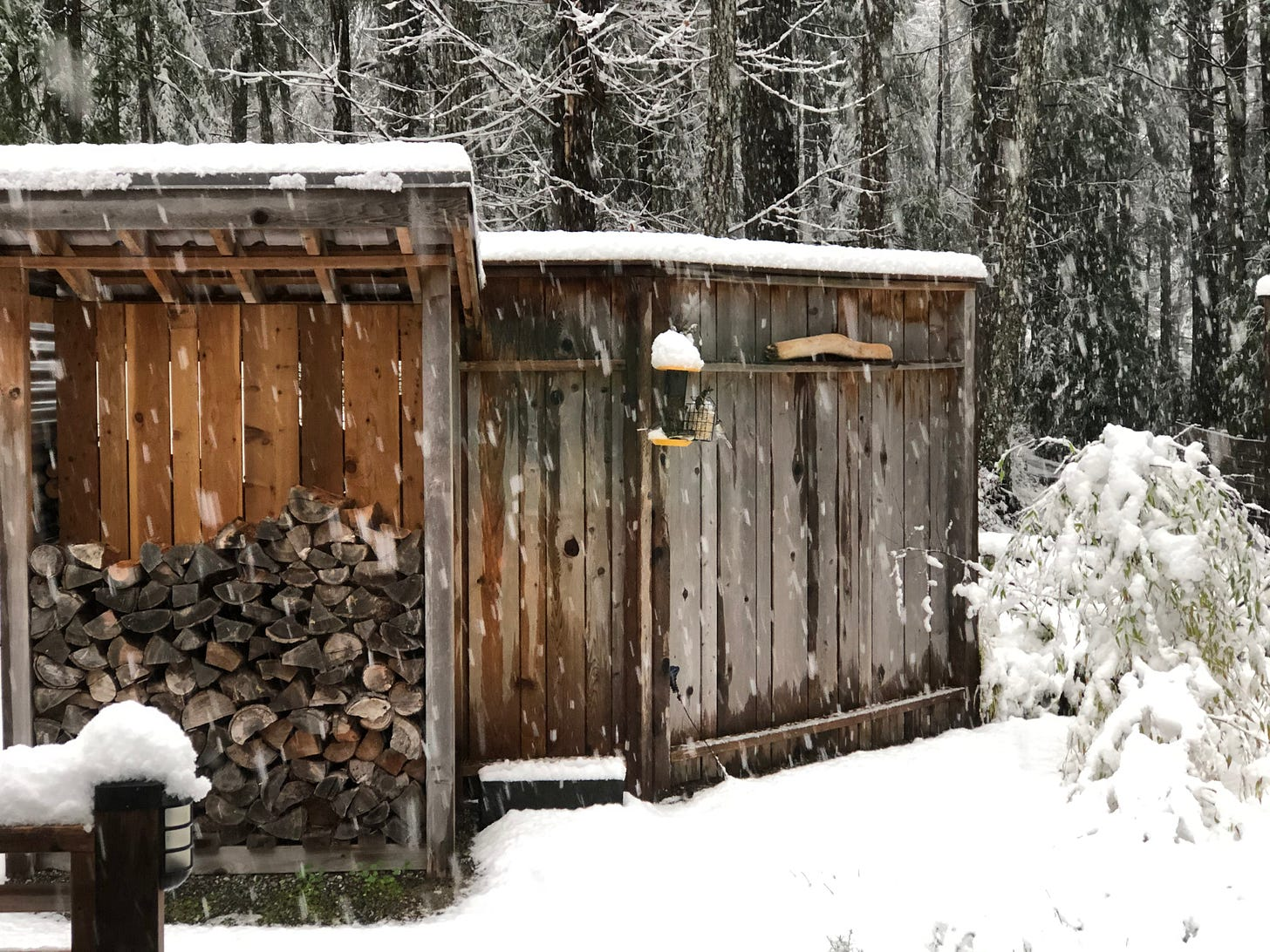 Wood shed and bird feeder on a winter morning, snow bends the bamboo to the ground