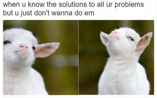"""Two images of a white baby goat looking indignant. Above the images is text that reads, """"When you know the solutions to all your problems but you just don't want to do them."""""""