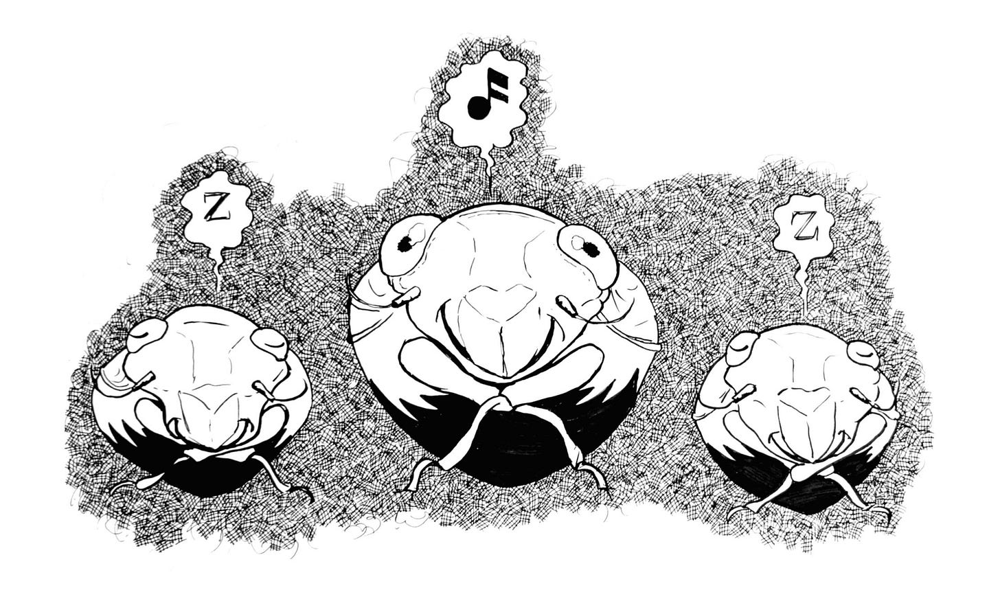 ink drawing of three cicadas, facing forward, underground. Two have their eyes closed a and Zed above their heads indicating sleep. The middle is awake with a musical note above their head.