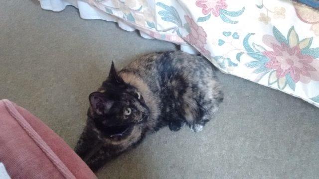 Our cat, Nietzsche