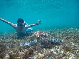 https://upload.wikimedia.org/wikipedia/commons/thumb/3/3b/Swimming-with-turtles-apo-island-archie-mercader.jpg/320px-Swimming-with-turtles-apo-island-archie-mercader.jpg