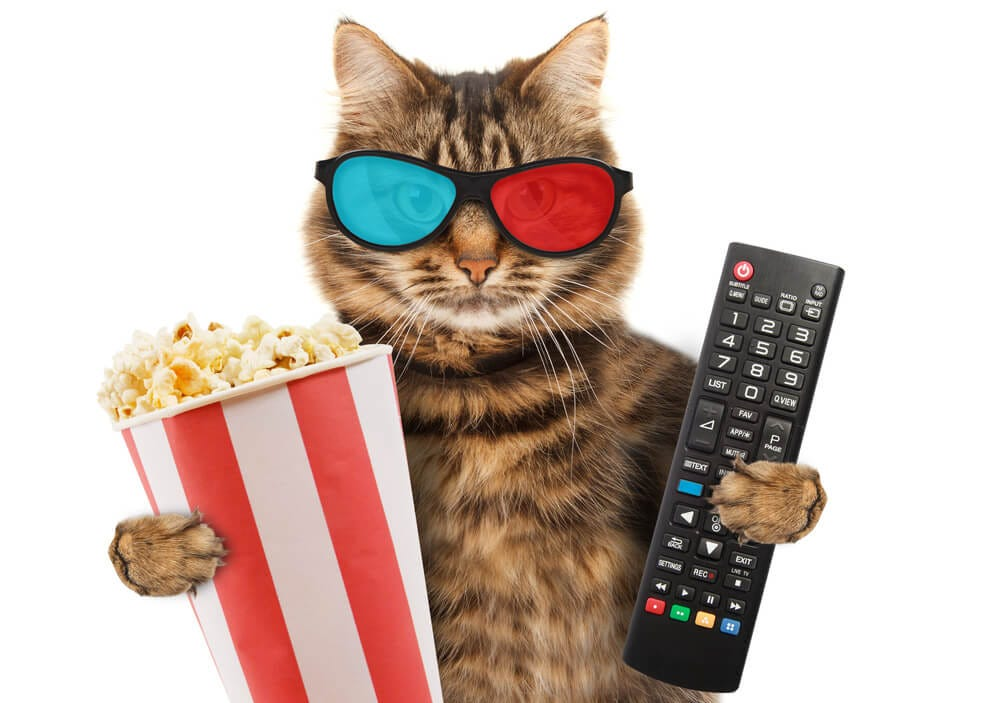 Can Cats Eat Popcorn and Still Be Healthy? Here What Experts Say