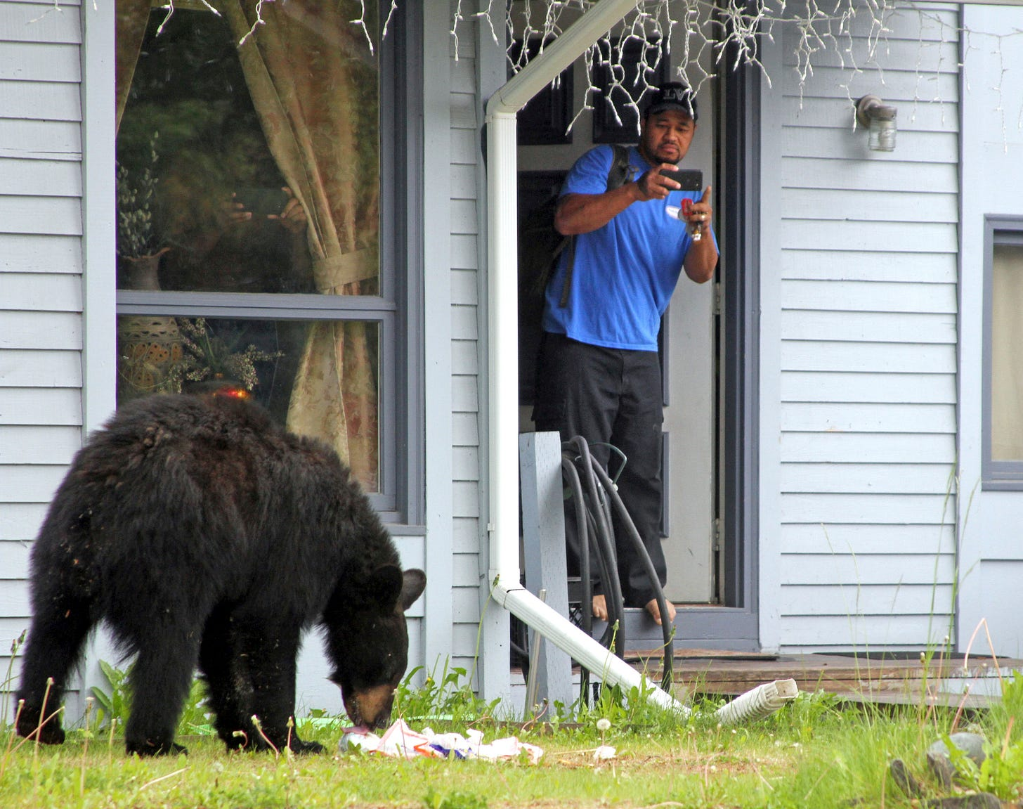 Small-Town New Hampshire's Battle with Bears and Liberty