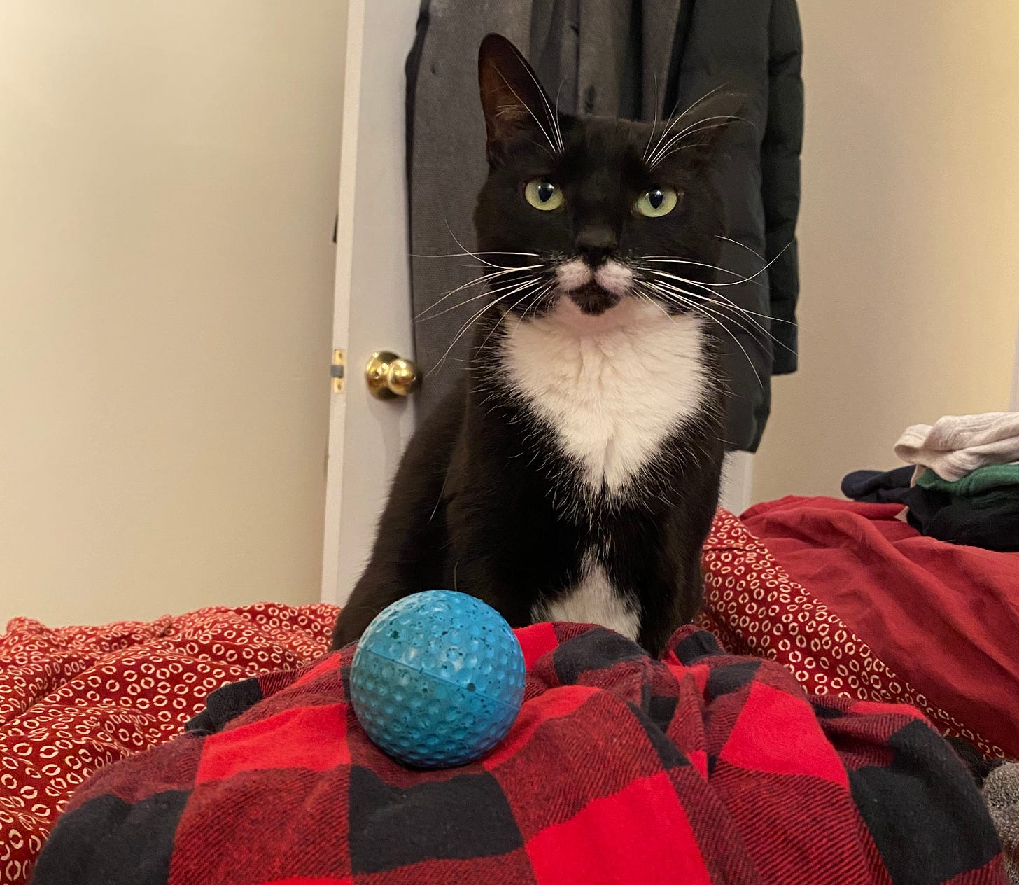 A black and white cat stares at the camera. Her blue bouncy ball sits in the foreground.