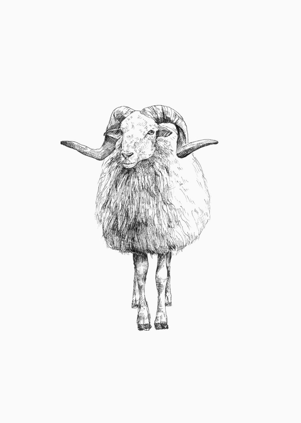 Animals - Drenthe Heath Sheep | Animals, Animal art, Illustration