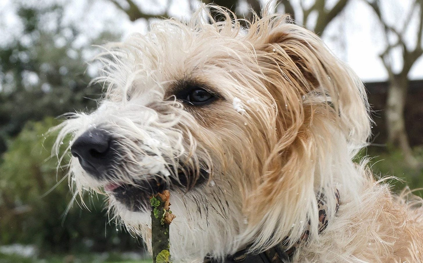 Image result for dilyn the dog