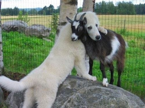 Image result for cute animals hugging