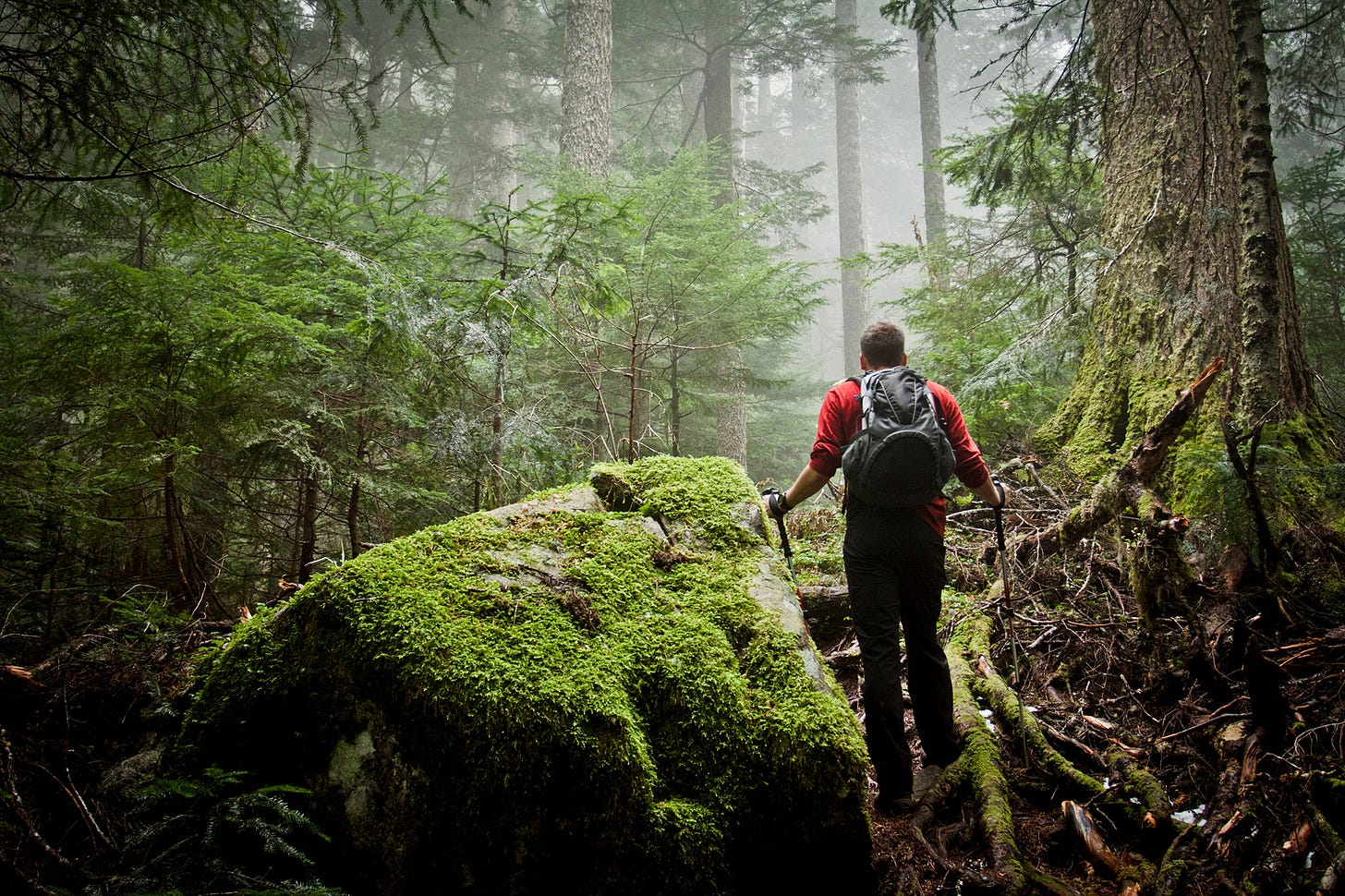 Image result for person wandering out of the wilderness