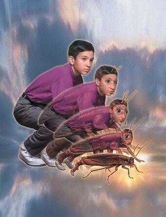 Cockroach   Seerowpedia   Fandom