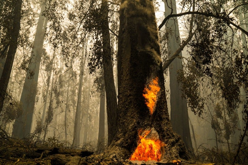 Smoke hangs low at Big Basin Redwoods State Park as some redwoods are still on fire on Aug. 22 in Boulder Creek, Calif.