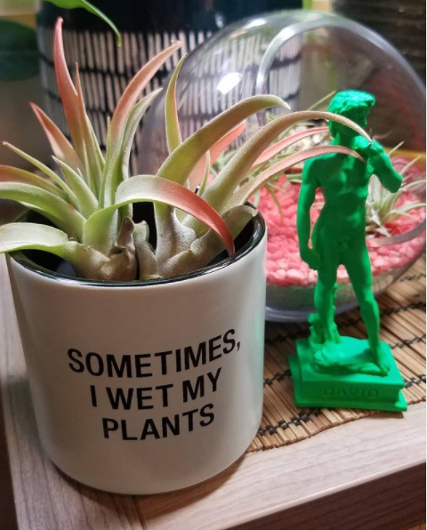 """small mint green ceramic planter that says """"sometimes I wet my plants."""" It has two air plants with bright red tips in it. There is also a tiny bright green statue of Michelangelo's David."""