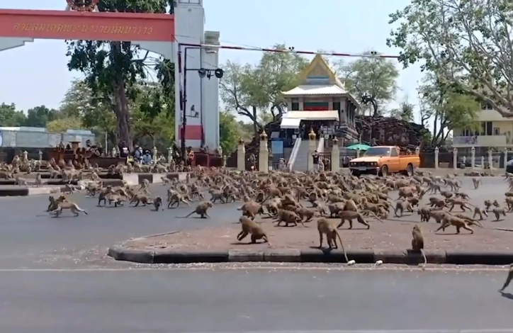 https://external-content.duckduckgo.com/iu/?u=https%3A%2F%2Fwww.worldofbuzz.com%2Fwp-content%2Fuploads%2F2020%2F03%2Fhundreds-of-starving-monkeys-raid-thai-town-after-covid-19-drives-tourists-who-feed-them-away-world-of-buzz.png&f=1&nofb=1