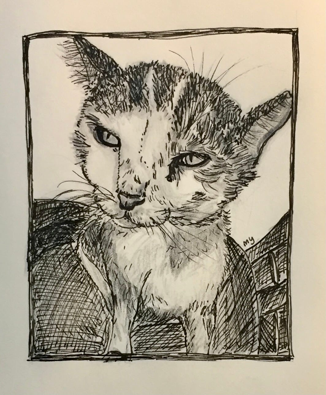 ink and pencil drawing of cat sitting on a chair