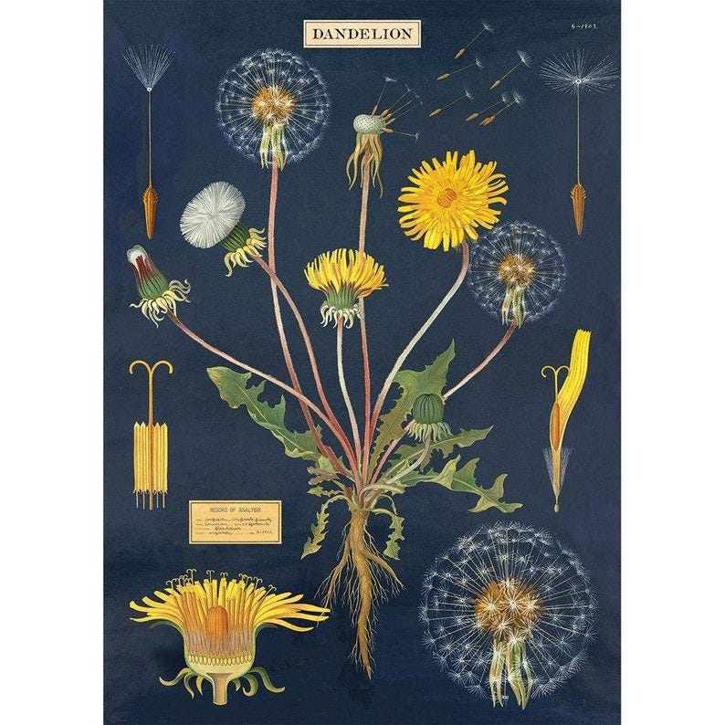 Cavallini Dandelion Wrapping Paper Craft Poster Decoupage image 0