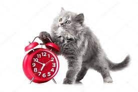 Adorable kitten with red alarm-clock isolated copyspace ⬇ Stock Photo,  Image by © valio84sl #70941353