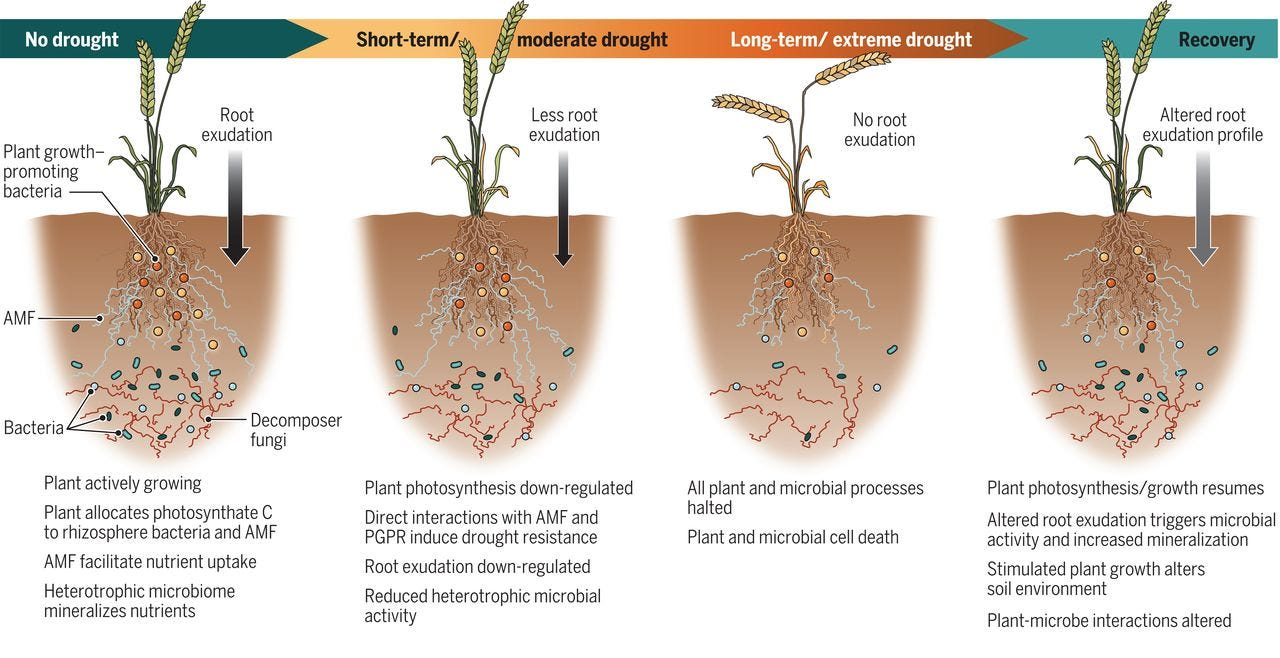 Illustration of root microbiome