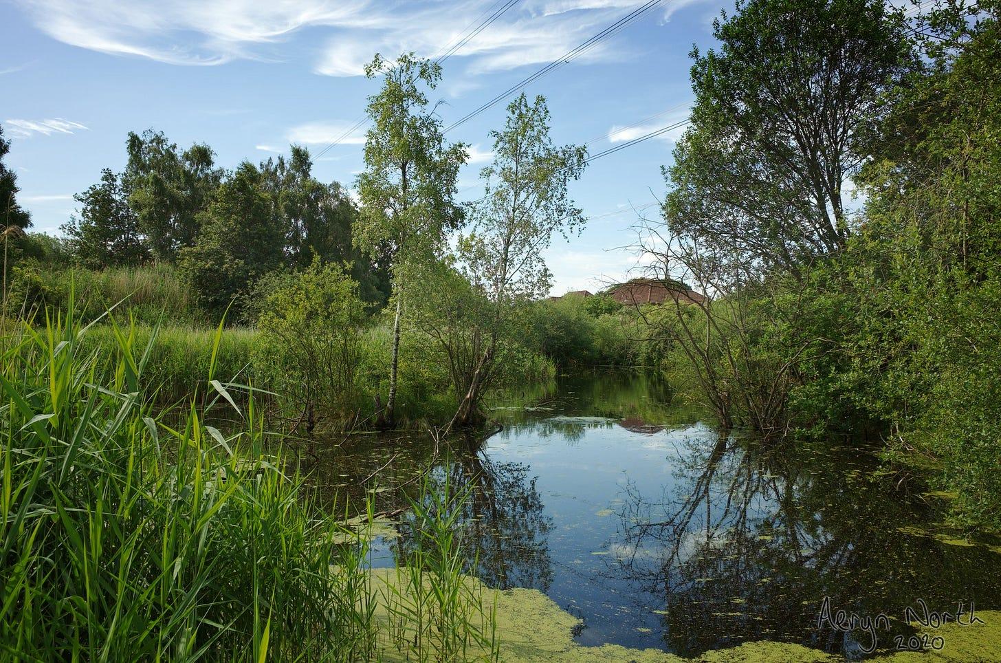 20200712-1045-03-pond-jacksons-brickworks-by-Aeryn-North.jpg