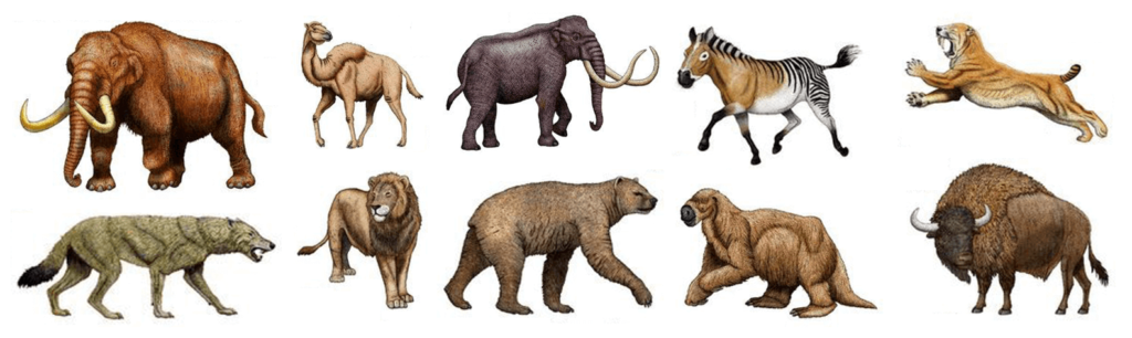 Extinct North American megafauna