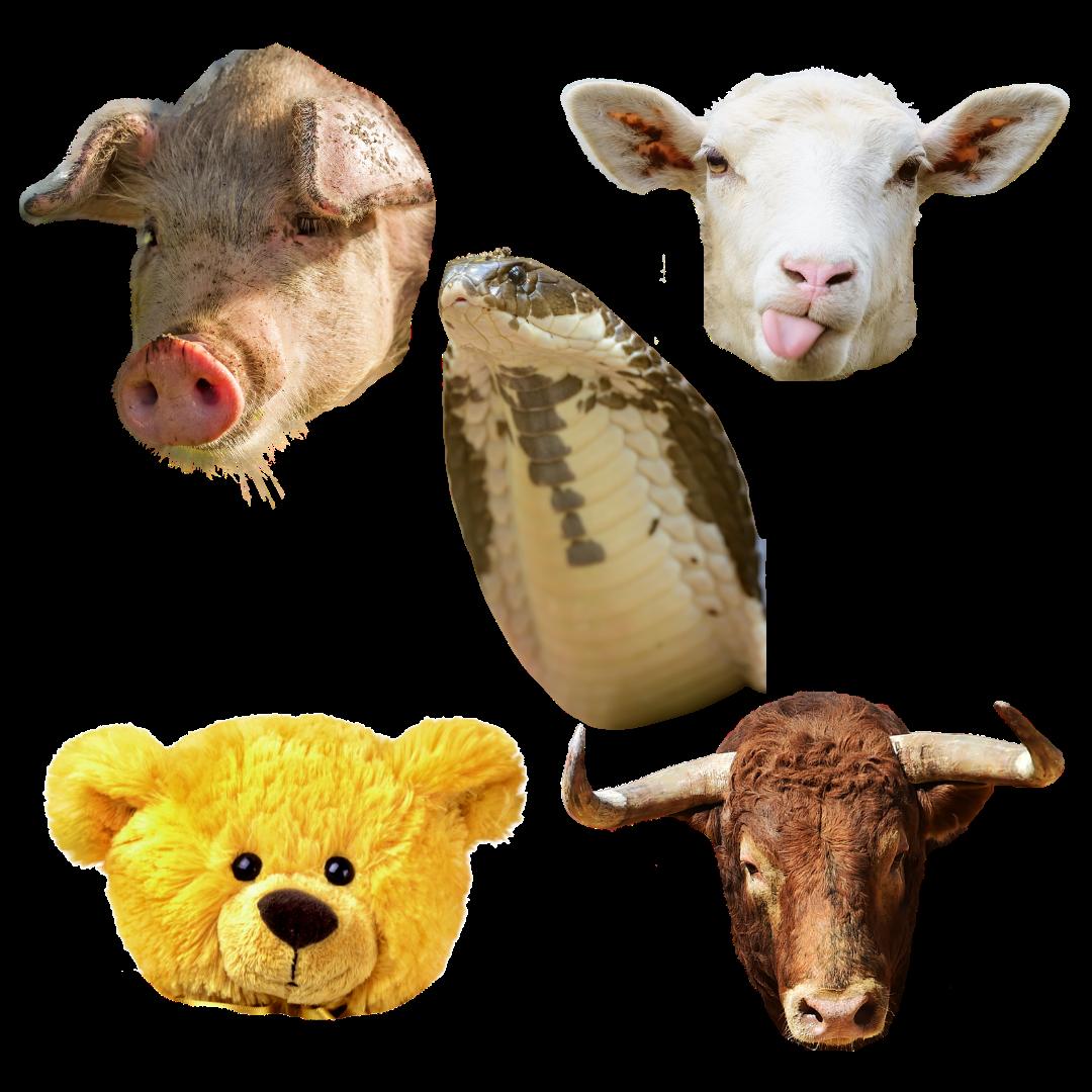 Five animal heads