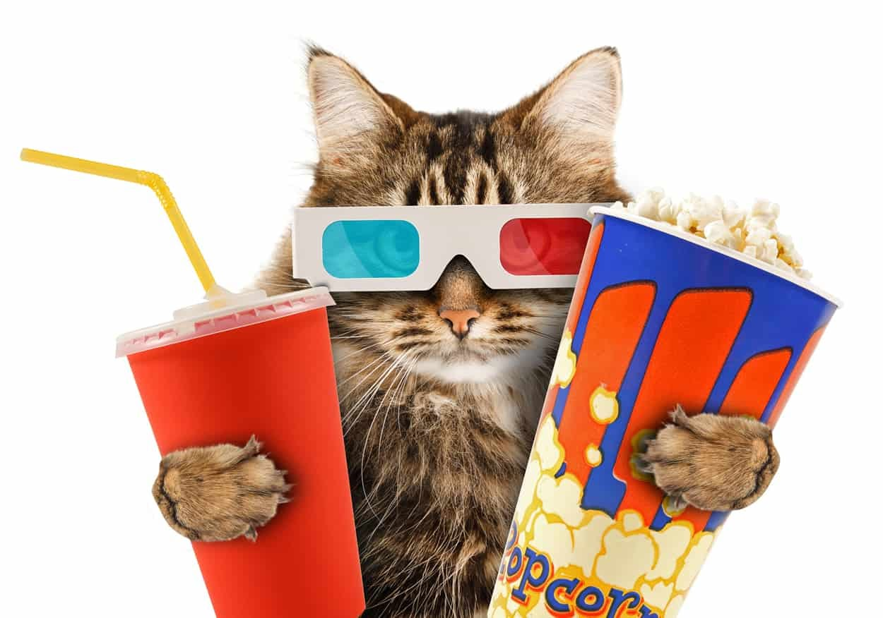 Can Cats Eat Popcorn?   Banixx