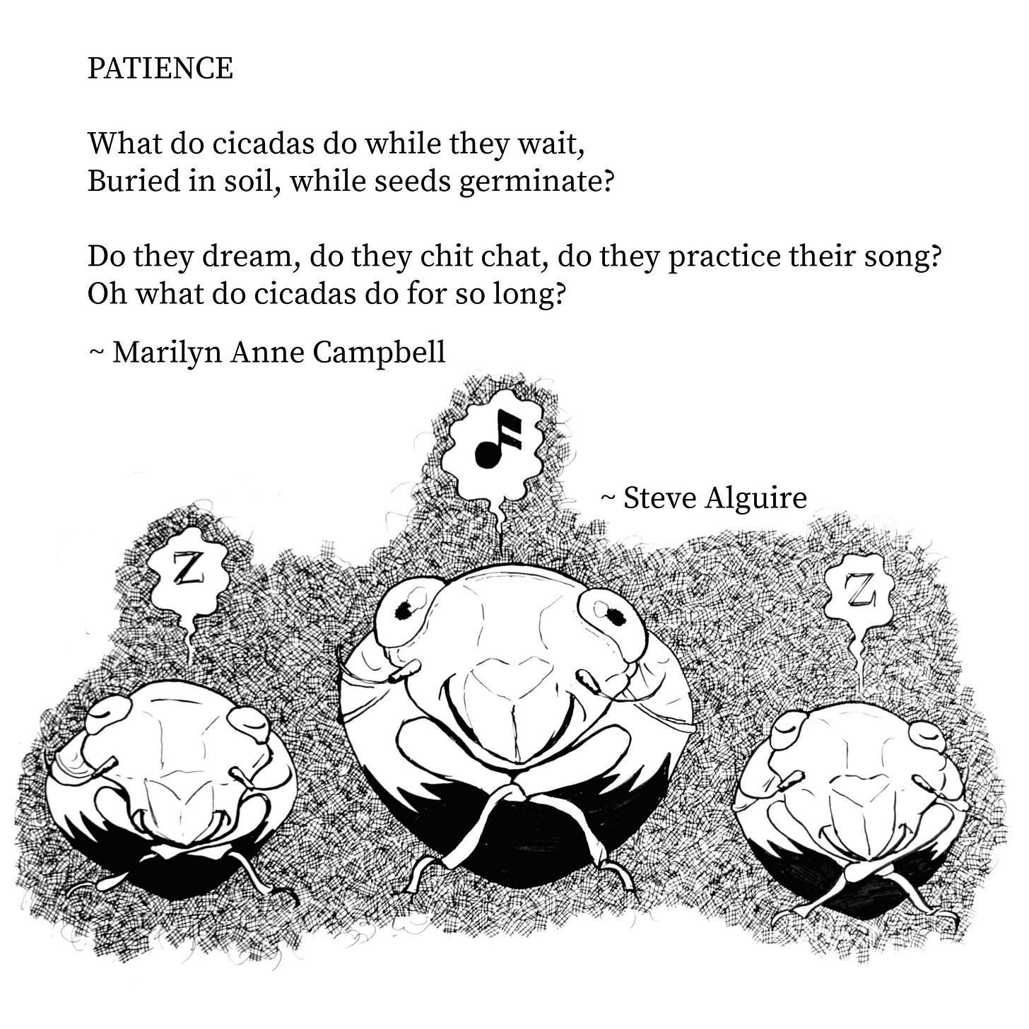 Text of poem titled Patience reads: What do cicadas do while they wait, buried in soil, while seeds germinate? Do they dream, do they chit chat, do they practice, do they practice their song? Oh what do cicadas do for so long? By Marilyn Anne Campbell. Underneath is an ink drawing by Steve Alguire of three cicadas underground, two asleep, one singing.