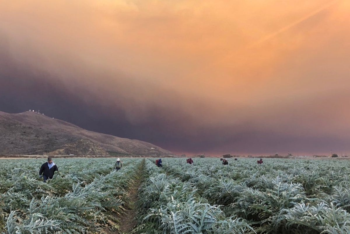 As Wildfire Smoke Fills the Air, Farmworkers Continue to Labor in the  Fields - Pacific Standard