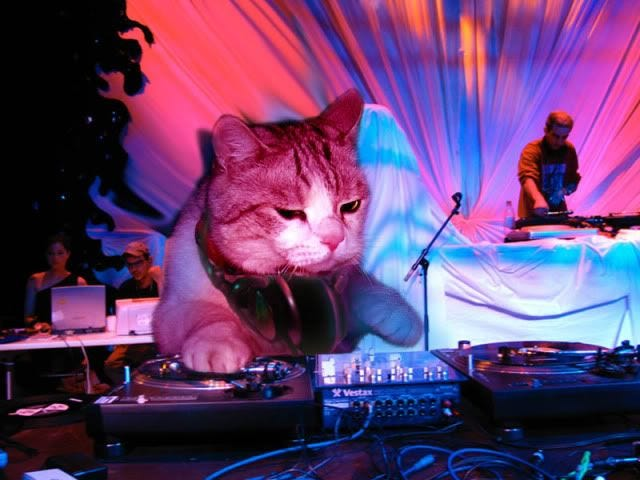 cat DJ | Cats, Funny cat pictures, Funny cats