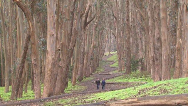 Presidio Park in San Francisco: A beautiful enclave with a unique history -  CBS News