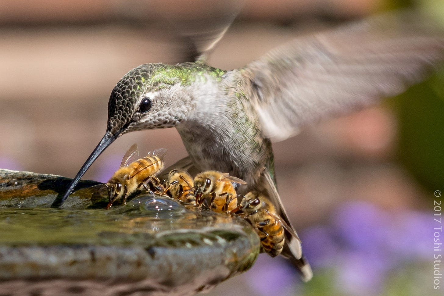 Hummingbird and Four Bees