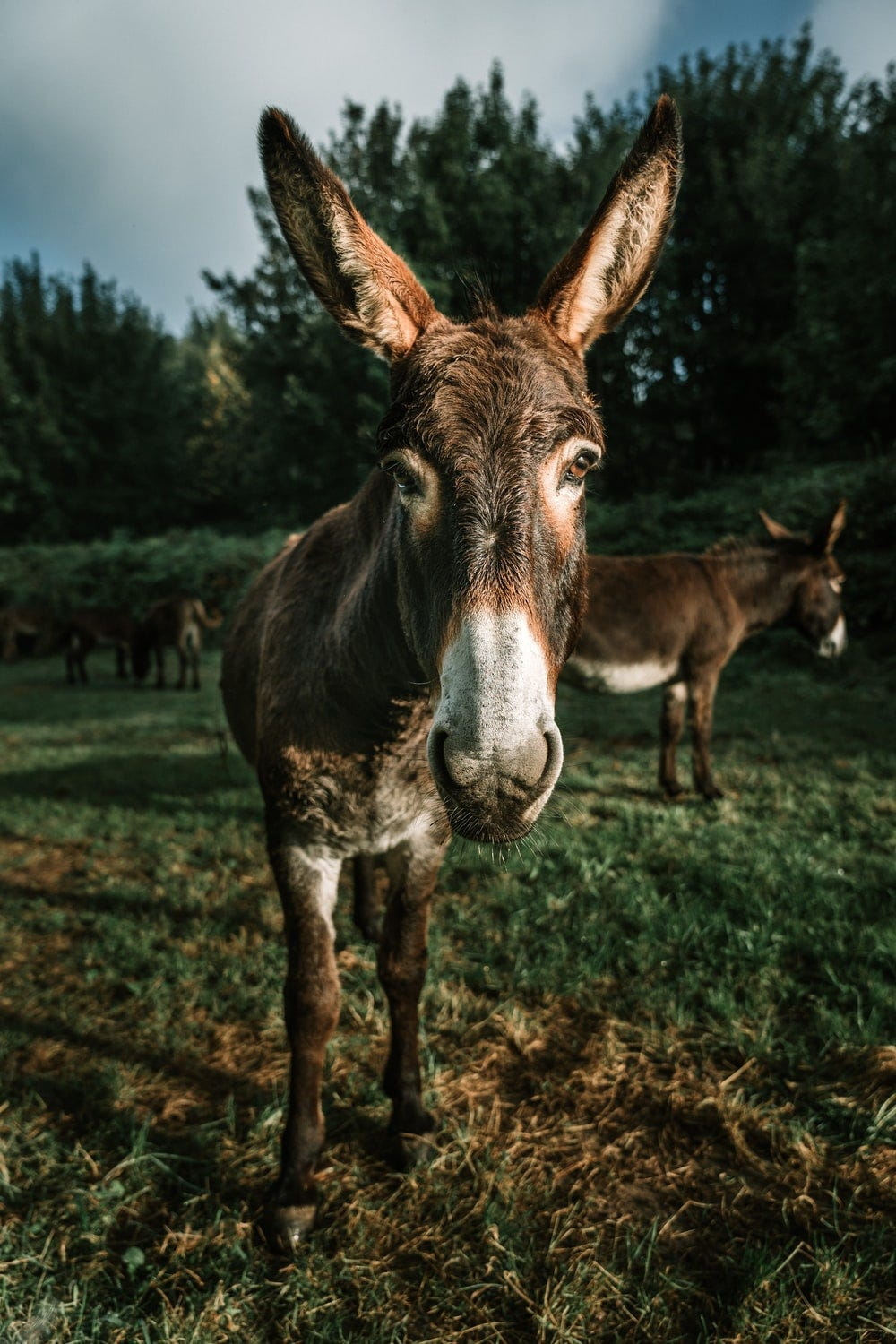 brown donkey on green grass during daytime