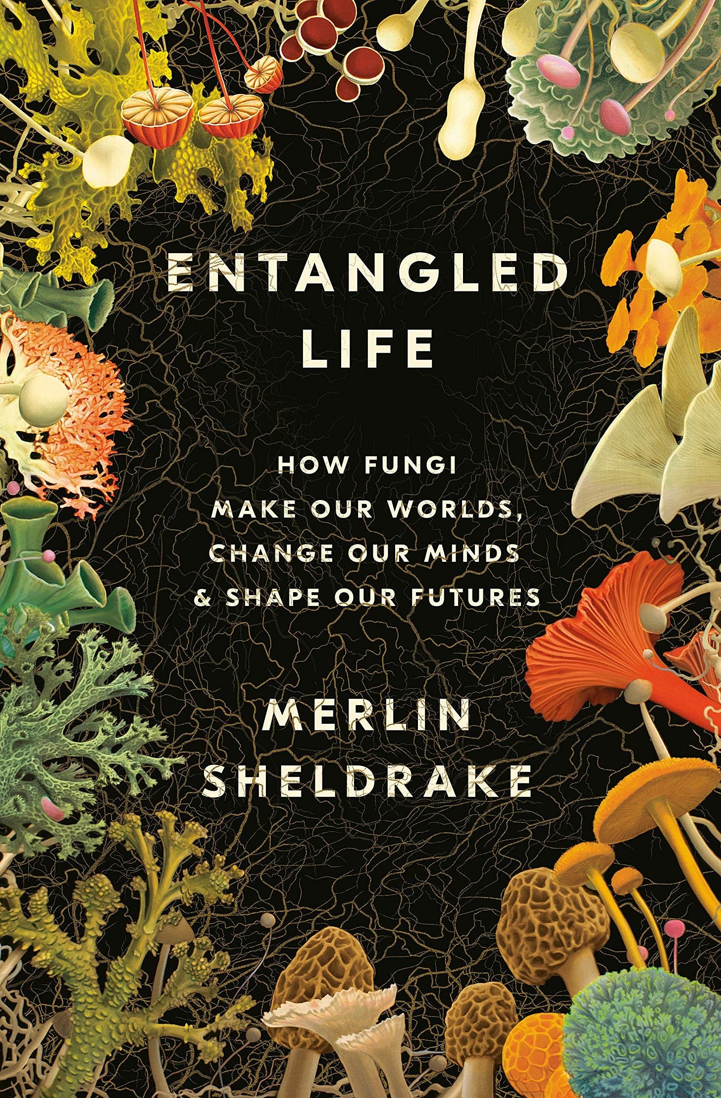 Entangled Life: How Fungi Make Our Worlds, Change Our Minds & Shape Our  Futures: Amazon.co.uk: Sheldrake, Merlin: 9780525510314: Books