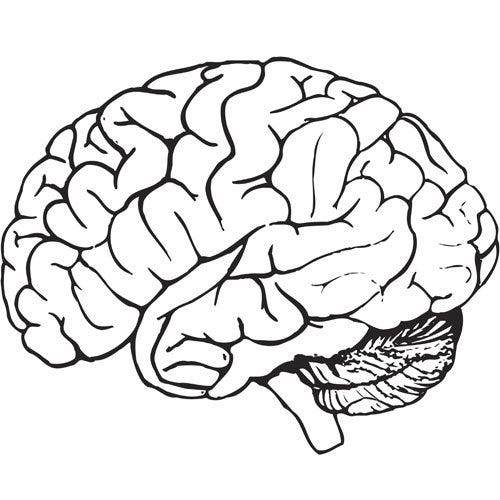 Free brain clipart » Clipart Station